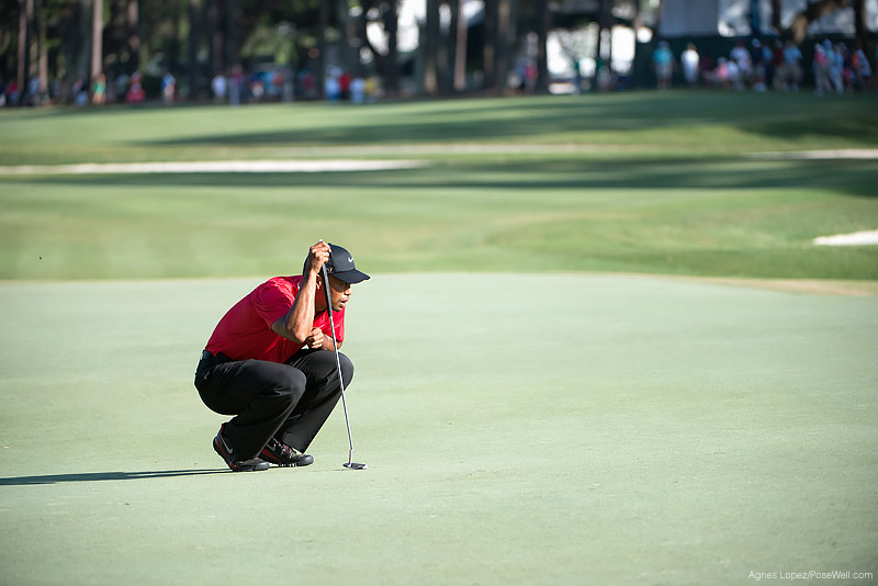 Tiger Woods lining up a putt at TPC Sawgrass from THE PLAYERS 2013 by Agnes Lopez